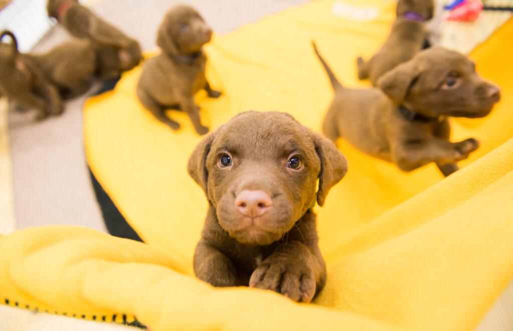 Puppies_UMBC50-3135